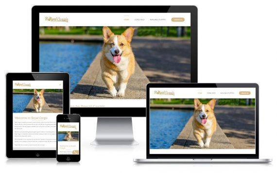 Royal Corgis - SEO Case Study